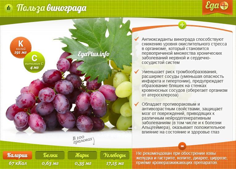Виноград красотка: описание сорта, фото, правила выращивания