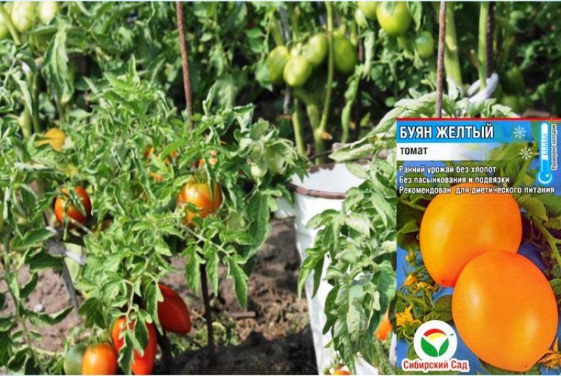 Лучшие сорта непасынкующихся томатов с описанием и фото