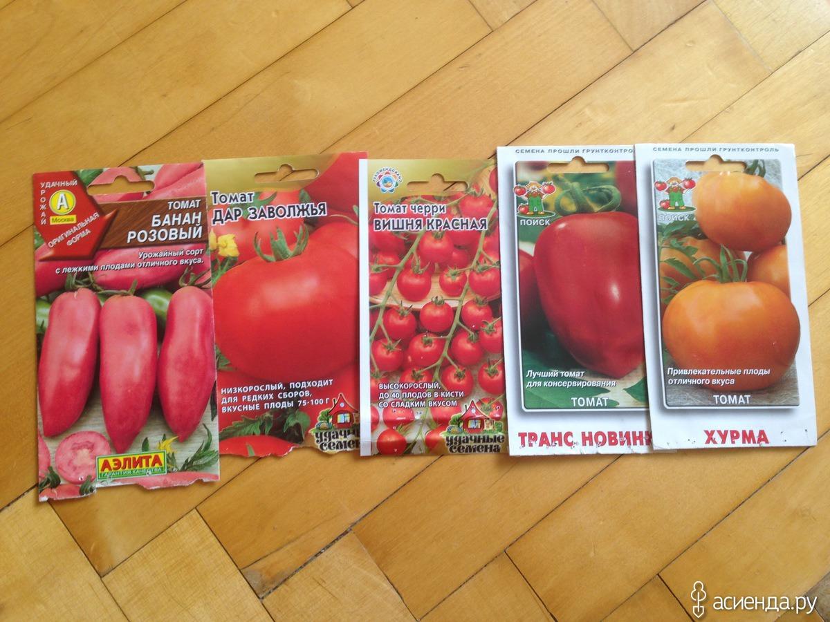 """Томат """"клуша"""" (супер клуша): характеристика и описание сорта помидор, фото поспевших плодов, как выращивать в открытом грунте и теплице? русский фермер"""
