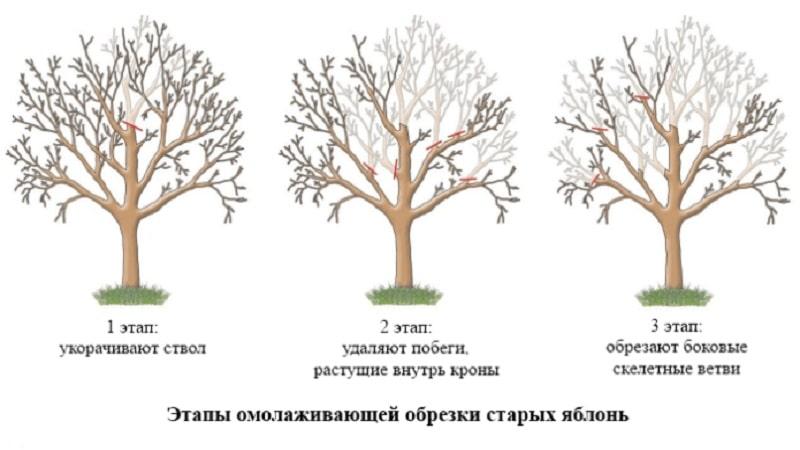 Как обрезать сливу осенью: схема и принципы формирования кроны и обрезки на плодоношение