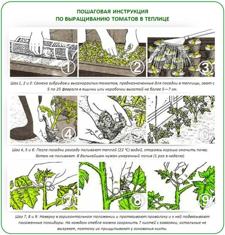 Выращивание томатов по голландской технологии - садоводству да