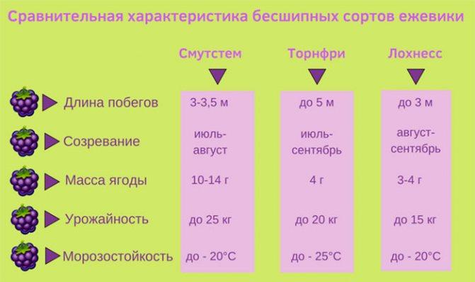 Сравнение сортов ежевики - научный эксперимент