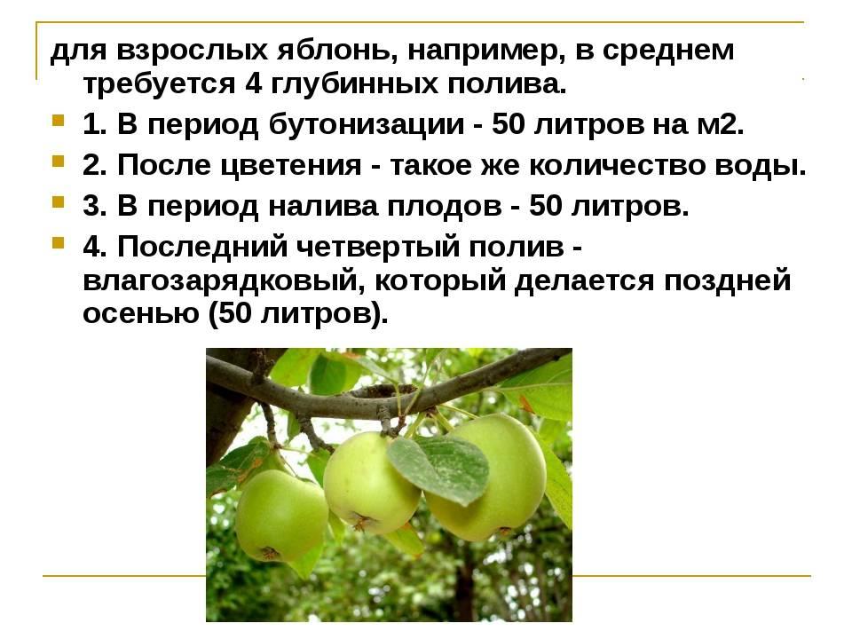 ✅ о поливе яблонь весной: как часто поливать яблони, весной, летом, осенью - tehnomir32.ru