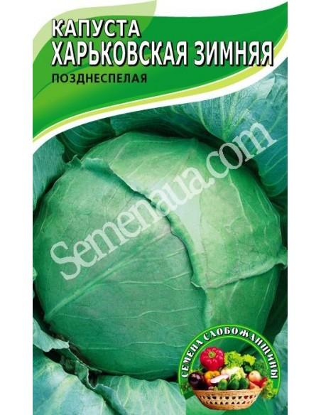 Капуста харьковская зимняя: описание и характеристика сорта, отзывы дачников с фото