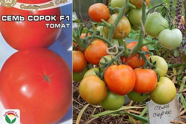 Томат корейский длинноплодный: описание сорта, отзывы, фото | tomatland.ru