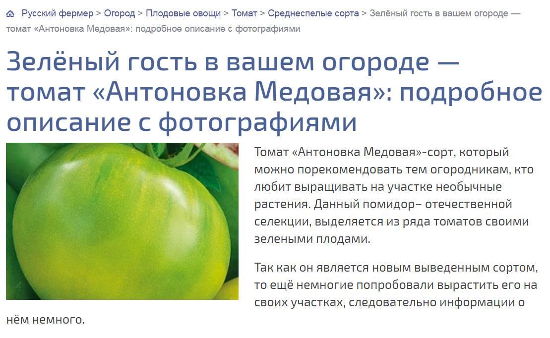 Фото, отзывы, описание, характеристика, урожайность сорта помидора «полосатый шоколад».