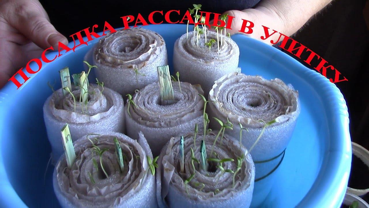 Посадка семян помидоров на рассаду: когда сажать, сроки, лучшие способы, пошаговая инструкция, особенности выращивания, уход и высадка в открытый грунт