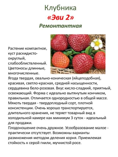 Клубника ремонтантная: выращивание и уход, лучшие сорта для россии, беларуси и других регионов с описанием, характеристикой, отзывами