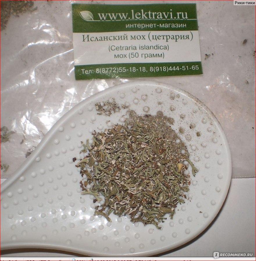 Ирландский мох - лечебные свойства, пищевая ценность, применение в препаратах ирландского мха
