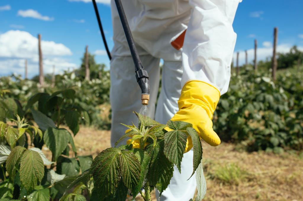Применение химических методов для спасения растений от вредных насекомых