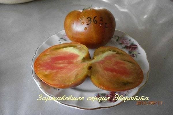 Об одном из самых вкусных и таинственных сортов томатов — заржавевшее сердце эверетта