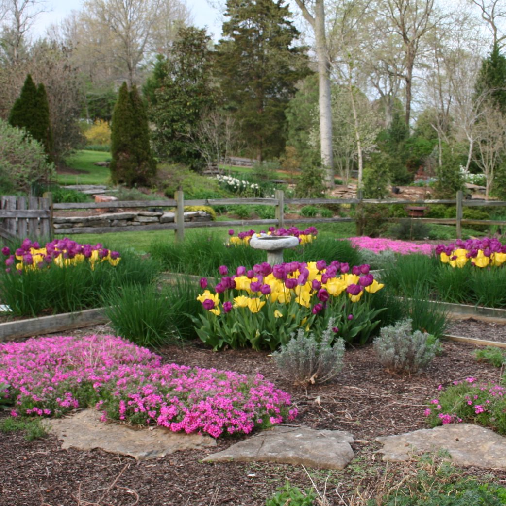 Как красиво посадить тюльпаны: все о ландшафтном дизайне