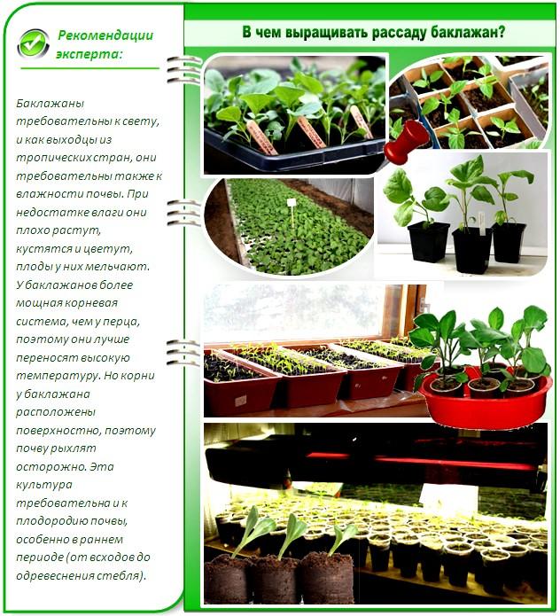 Как вырастить рассаду баклажанов в домашних условиях пошаговая инструкция, видео
