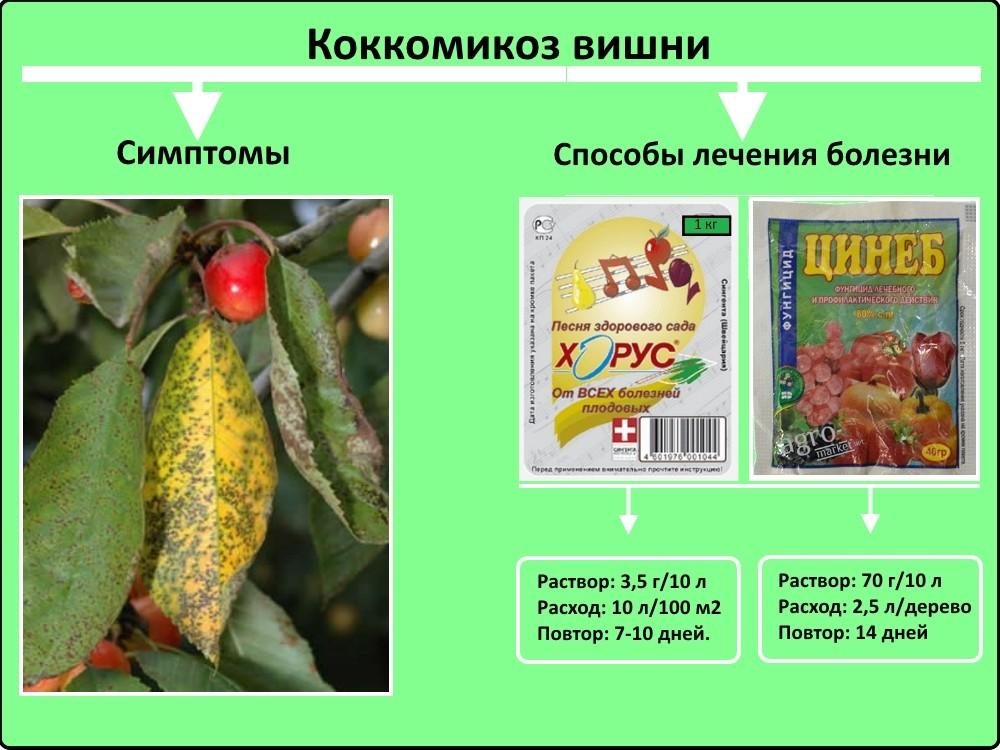 Монилиоз: лечение и профилактика, как бороться на вишне, абрикосе
