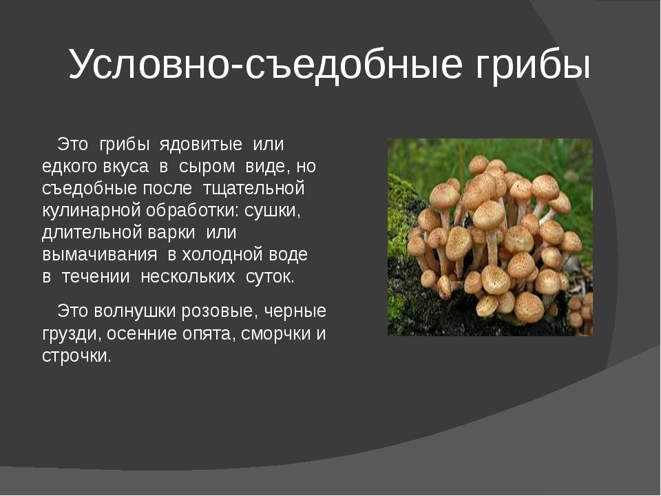 Гриб белянка: описание, полезные свойства, варианты приготовления - лучший огород