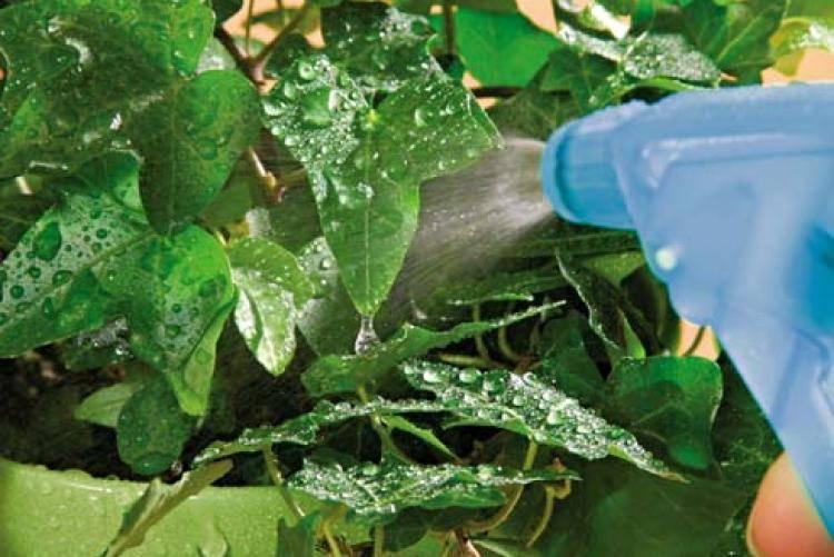 Капуста: характеристика видов и особенности выращивания в открытом грунте