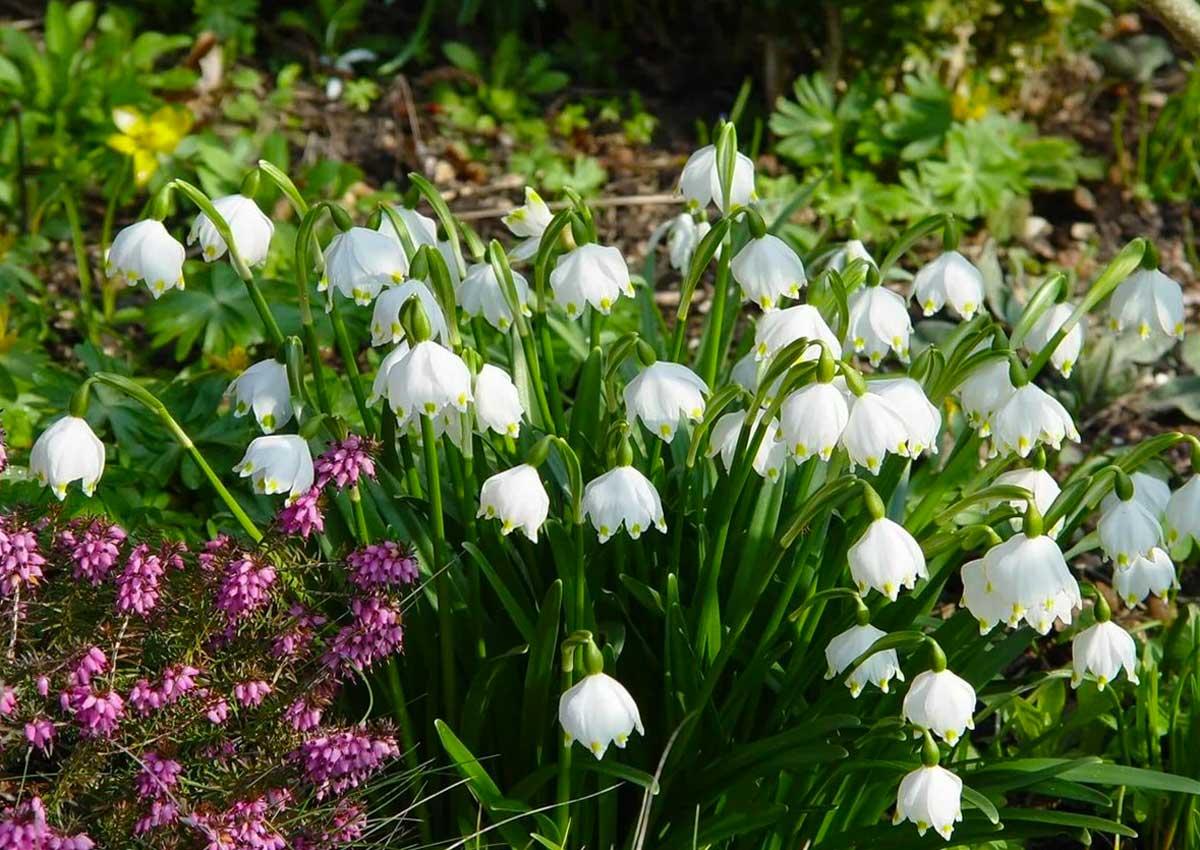 Какие цветы сажать на рассаду в апреле: список с названиями, фото