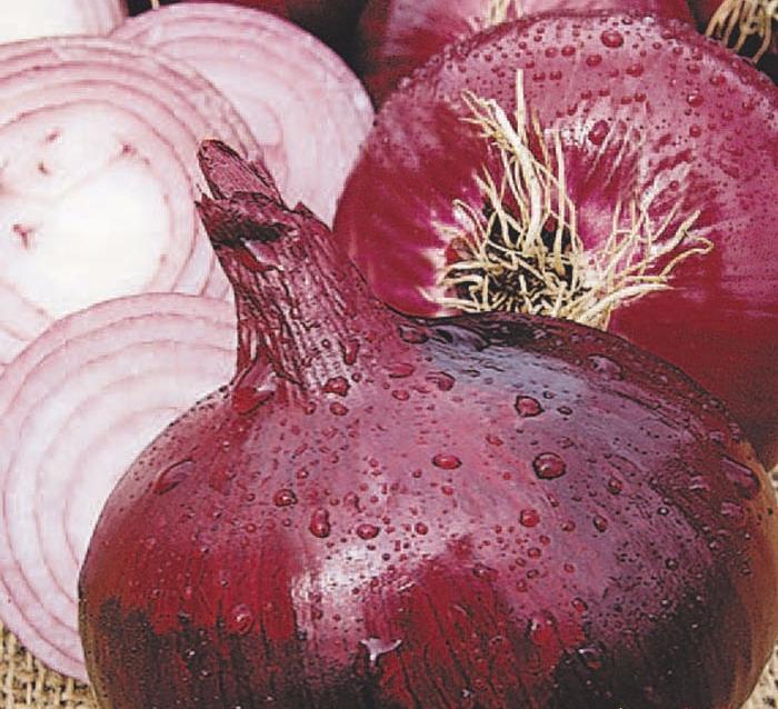Красный лук кармен: описание, особенности выращивания и уход