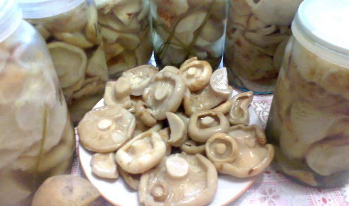 Рецепты маринованных груздей с уксусом