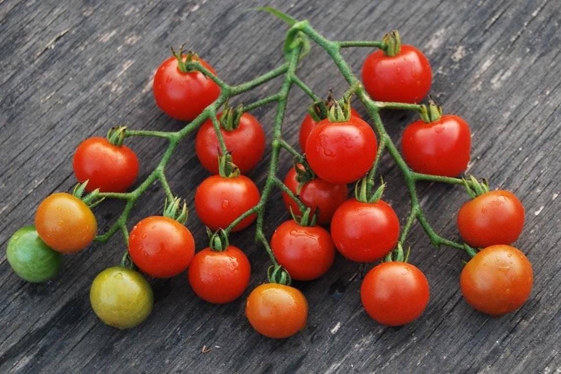 Томат черри алая гроздь f1: описание, особенности агротехники и отзывы о гибриде