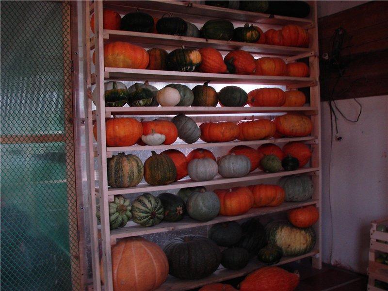Как хранить овощи на балконе зимой в картонной коробке. советы: как хранить овощи на балконе зимой