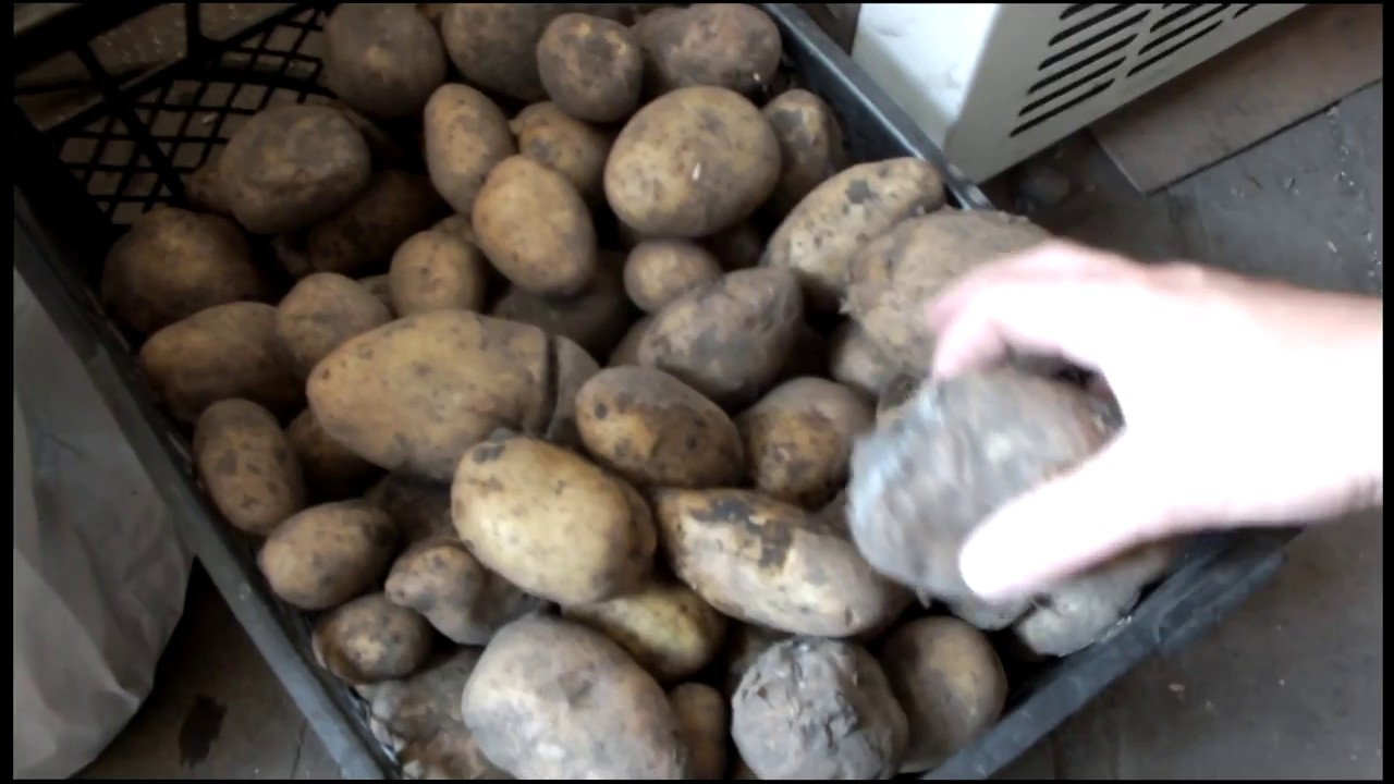 ✅ можно ли замораживать вареный картофель - усадьбанатали.рф