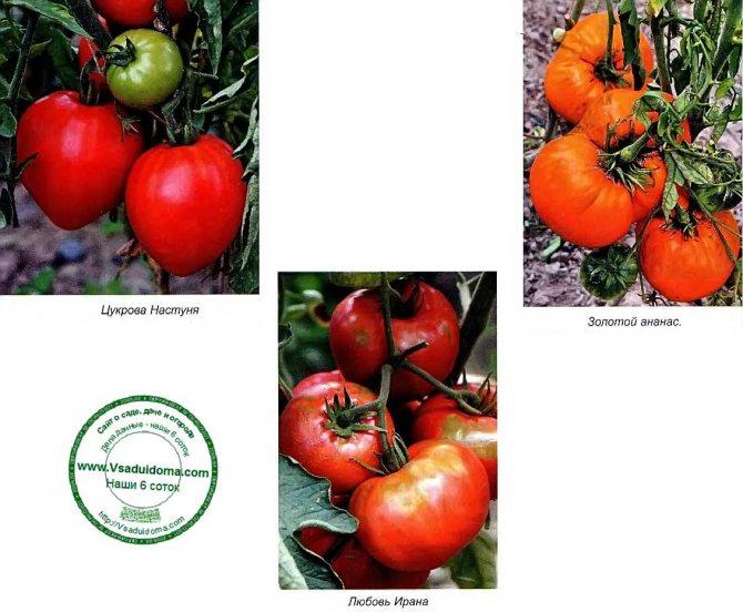 Томат добрый f1: отзывы, фото, урожайность, условия выращивания