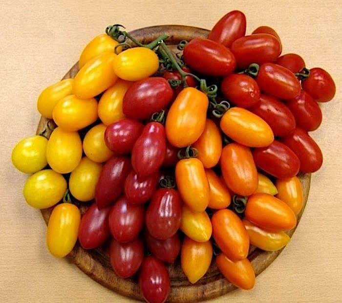 Томат финик красный: описание, отзывы, фото, урожайность   tomatland.ru