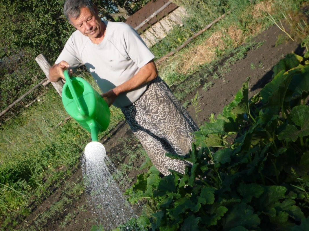 ᐉ как часто поливать свеклу после посадки в открытом грунте? - ogorod-u-doma.ru