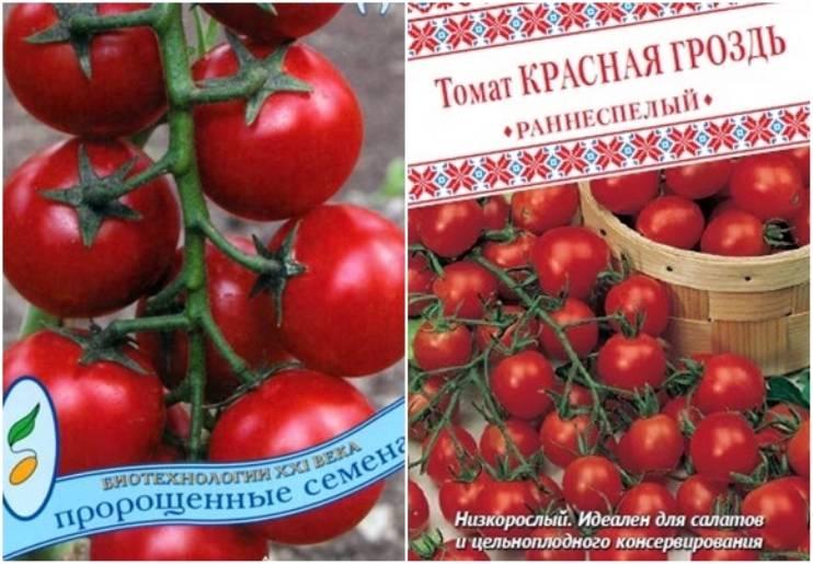 Томат бурая гроздь f1: отзывы, фото, урожайность | tomatland.ru