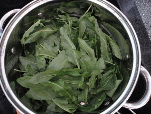 Заготовка щавеля на зиму — лучшие рецепты сохранности витаминов