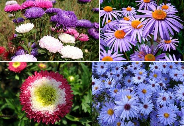 Цветок гибискус садовый: описание, посадка и уход в открытом грунте, сорта, размножение, приметы - sadovnikam.ru