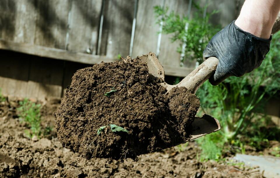 Секреты как удобрять навозом огород