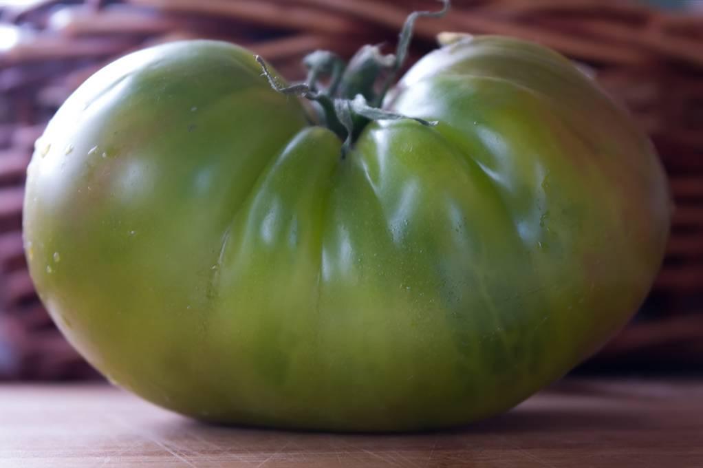 Описание томата Изумрудное яблоко, выращивание рассады и борьба с вредителями