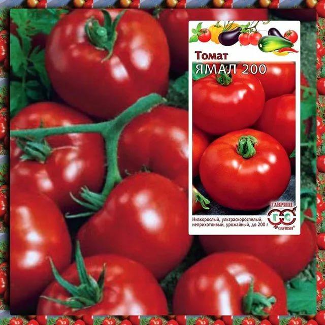 Сорта томатов: что такое детерминантный, полудетерминатный и супердетерминантный вид, их отличия и особенности, а также их преимущества и недостатки русский фермер