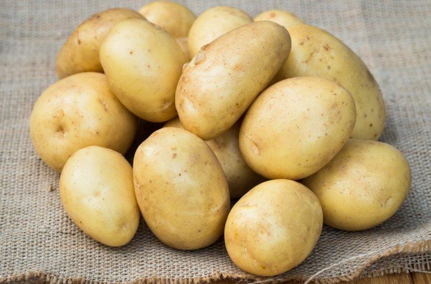 Характеристика картофеля сорт чародей