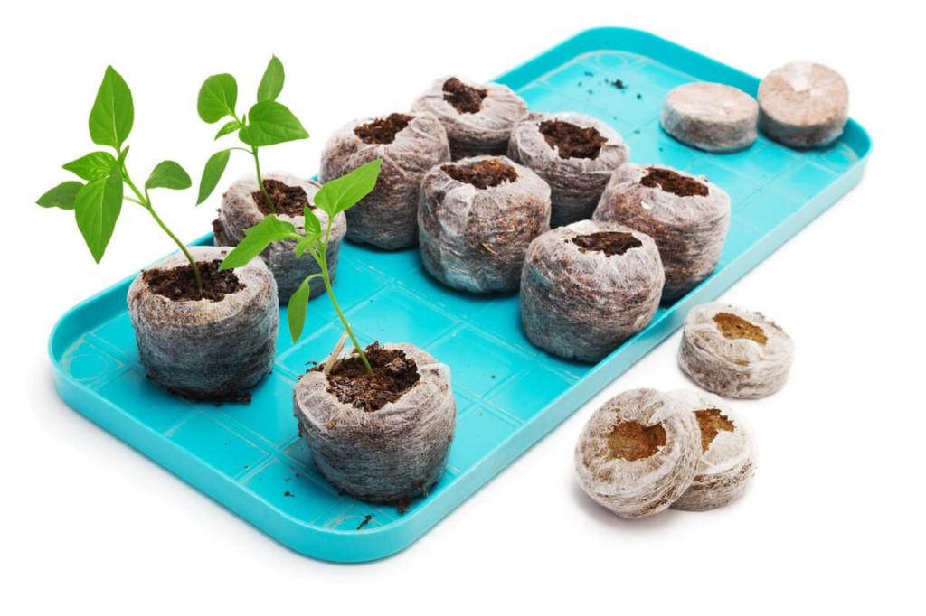Выращивание рассады помидор в торфяных таблетках: от посева семян в домашних условиях до посадки томатов в землю, инструкция, как можно получить хороший урожай русский фермер