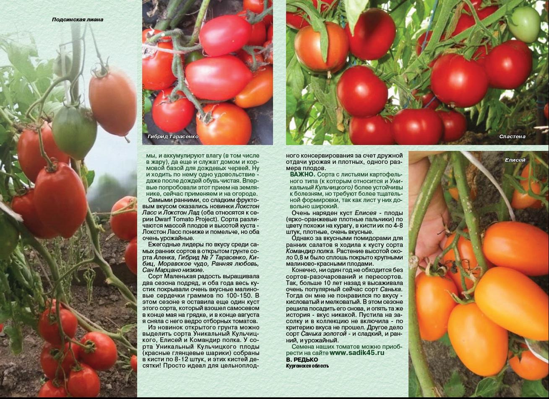 Томат сорта сластена — характеристики, описание и нюансы выращивания, отзывы