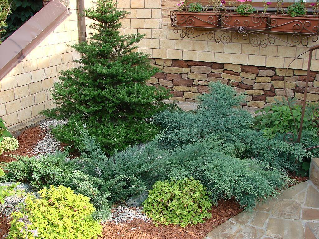 Что можно посадить рядом с хвойными – примеры удачных сочетаний растений - огород, сад, балкон - медиаплатформа миртесен