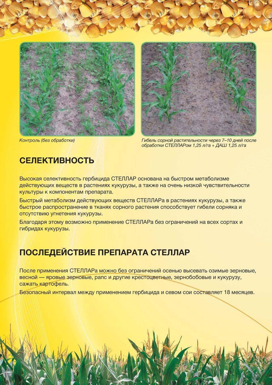 Имазапир: инструкция по применению гербицида, нормы расхода и аналоги