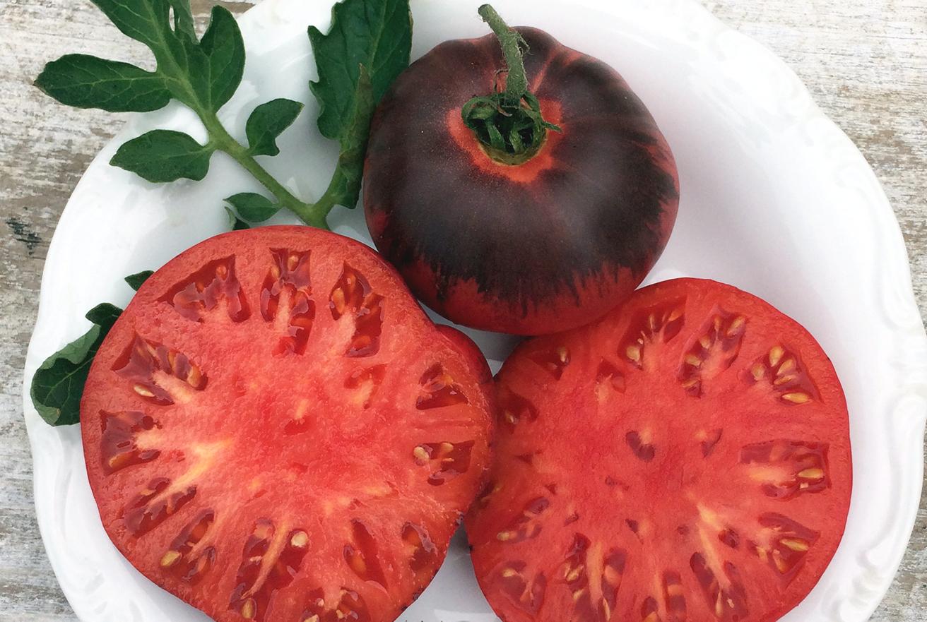 Описание сорта томата тигренок и особенности выращивания - всё про сады