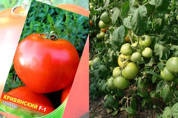 Томат лирика f1 (партнер) - описание сорта гибрида, характеристика, урожайность, отзывы, фото