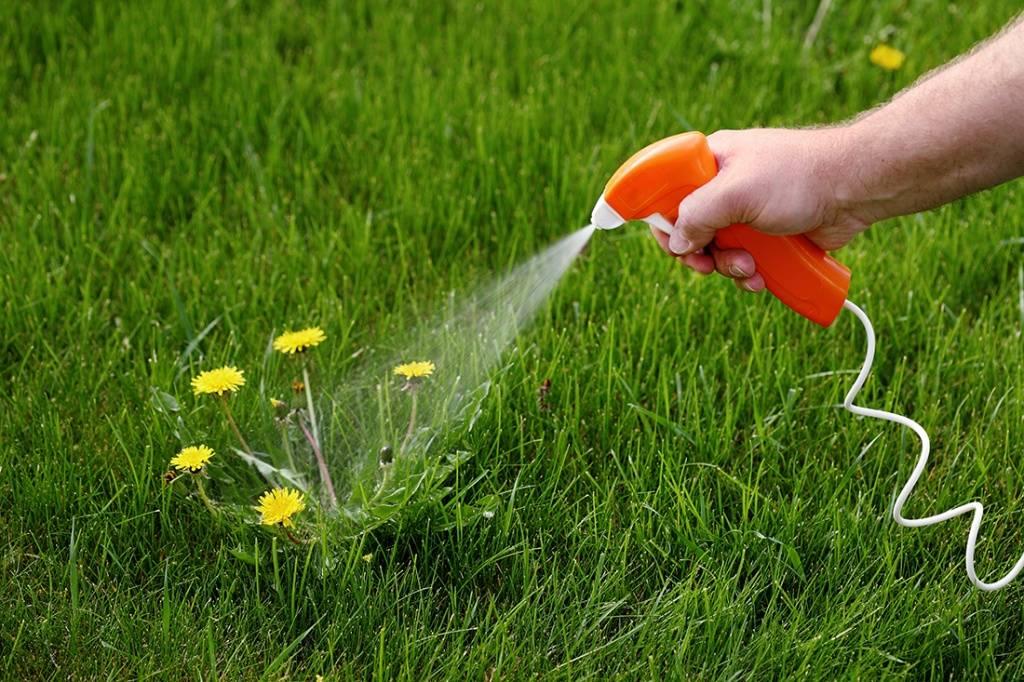 Сурепка обыкновенная: эффективно избавляемся от сорного растения