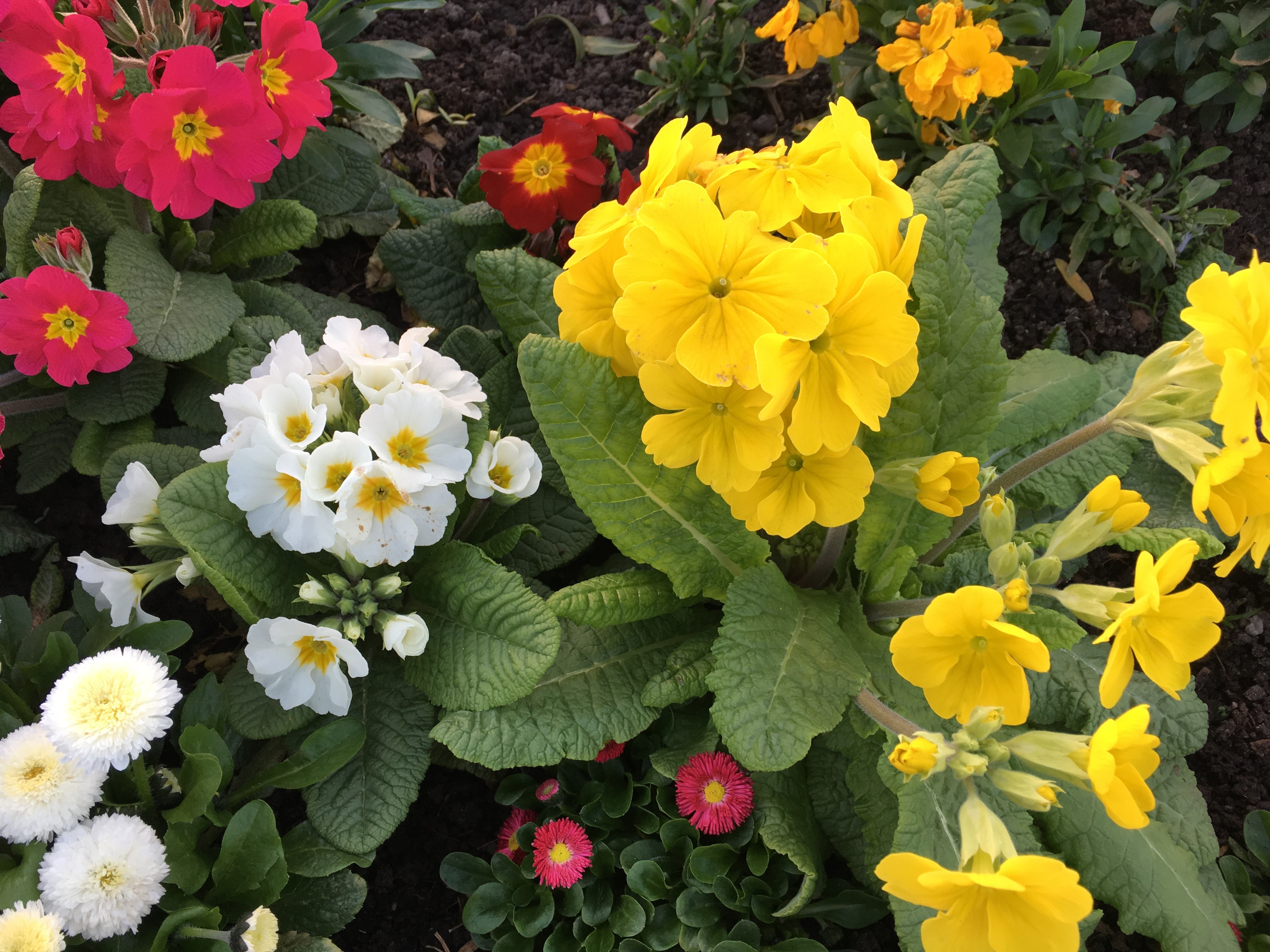 Какие однолетние цветы посеять в открытый грунт в апреле