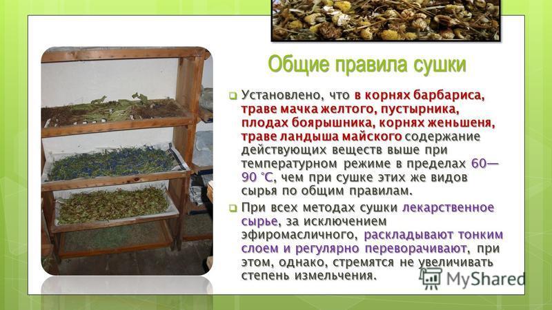 Когда собирать, как сушить и хранить ромашку в домашних условиях: правила заготовки ромашки на зиму