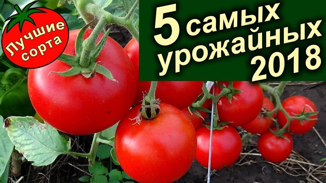 Описание лучших сортов и рейтинг томатов для теплицы на 2021 год