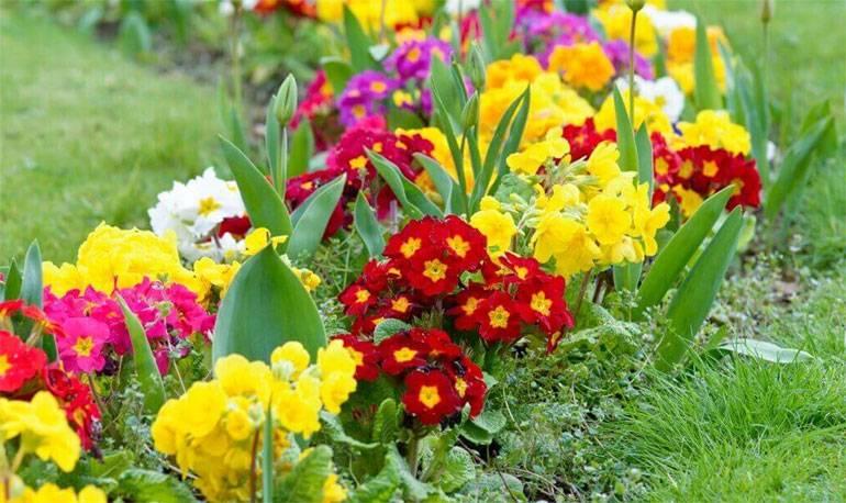 Однолетние цветы, цветущие все лето: сорта, уход, посадка