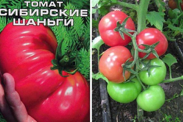 Томат сибирские шаньги - описание и характеристика сорта