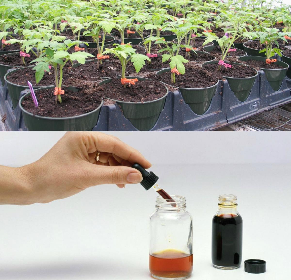 Посев семян в открытый грунт: полезные советы и лайфхаки
