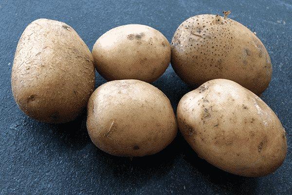 Ранние сорта картофеля для средней полосы, подмосковья, сибири, черноземья - отзывы, описание и характеристика